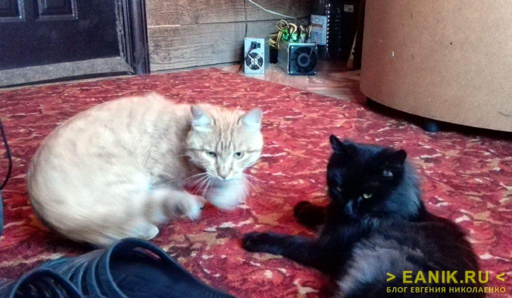 Коты заценили майнер - новый обогреватель